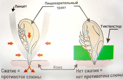http://rrc2011.rogaining.ru/images/stories/acarus/kl300001.jpg